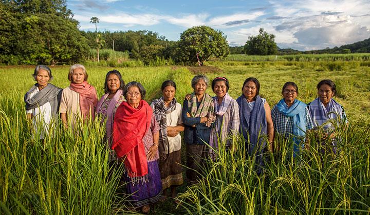 En grupp thailändska kvinnor står på ett bomullsfält med halsdukar i olika färger om sin halsar.