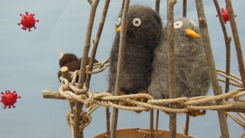 Två fåglar i bur av Elisabeth Larsson
