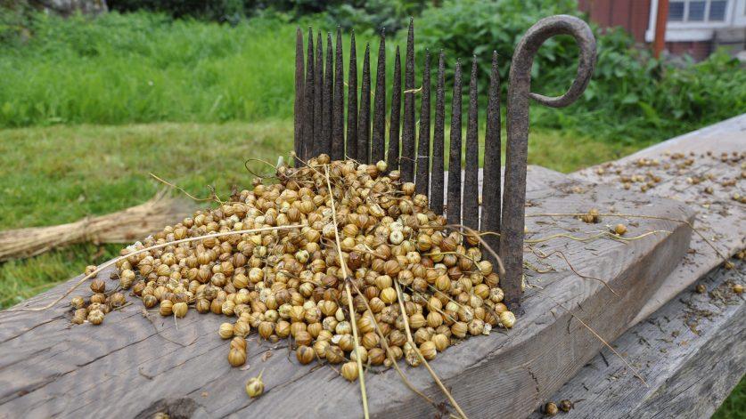 Frörepa linberedning